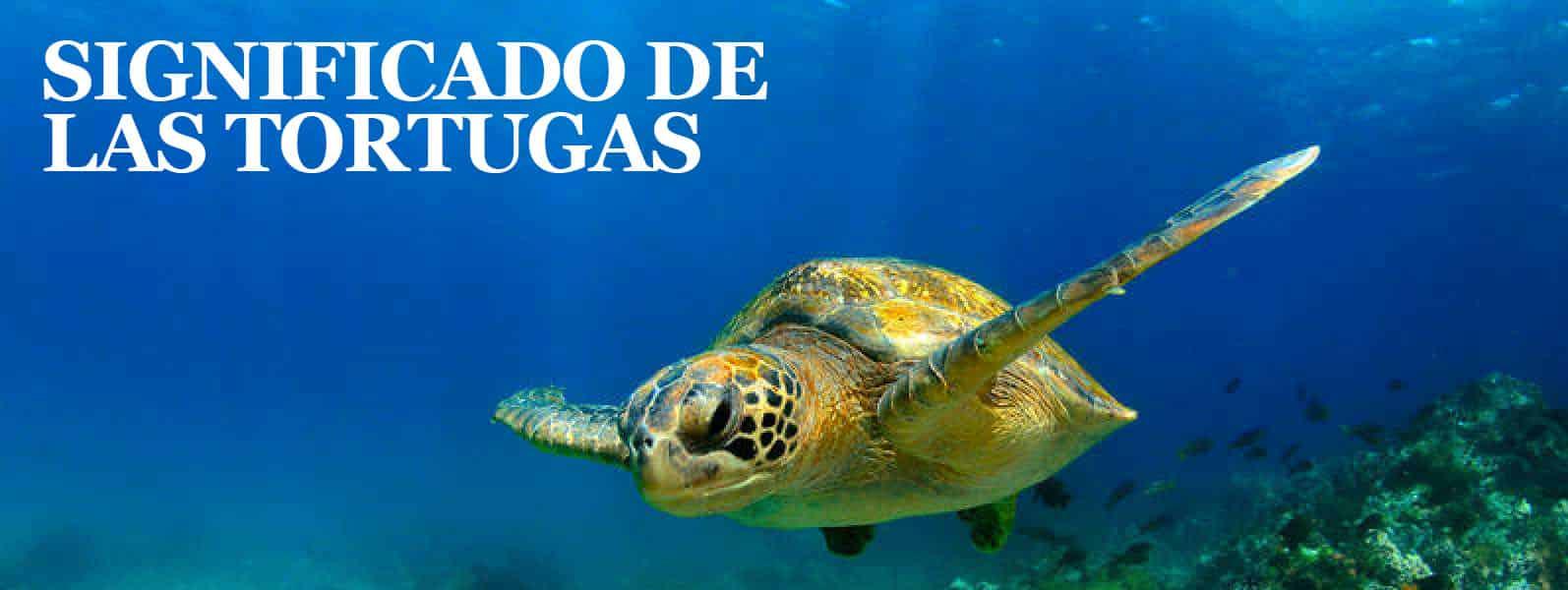 Significado de las tortugas